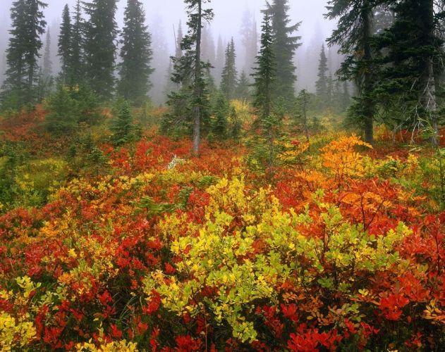 حديقة الزهوربكوالالمبور