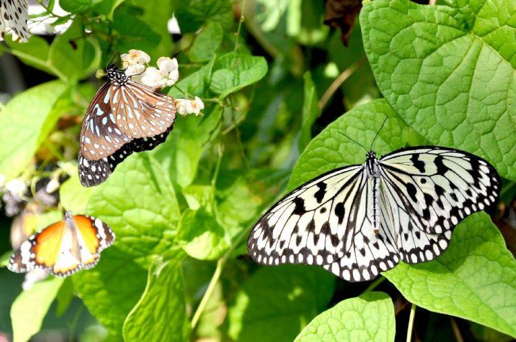 حديقة الفراشاتبكوالالمبور