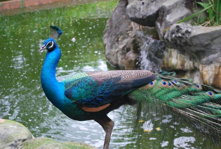 حديقة الطيور كوالالمبور