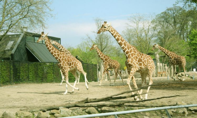 حديقة حيوانات كوبنهاجن في الدنمارك