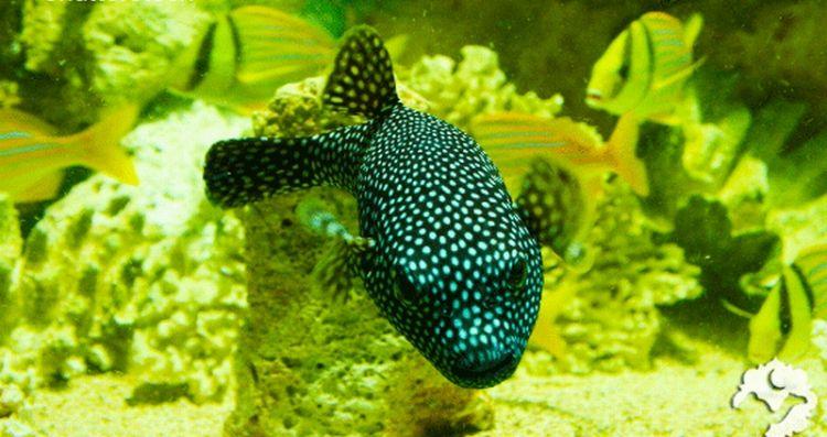 أسماك ماليه - جزر المالديف