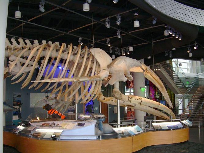 مركز متاحف العلوم الطبيعية من الداخل