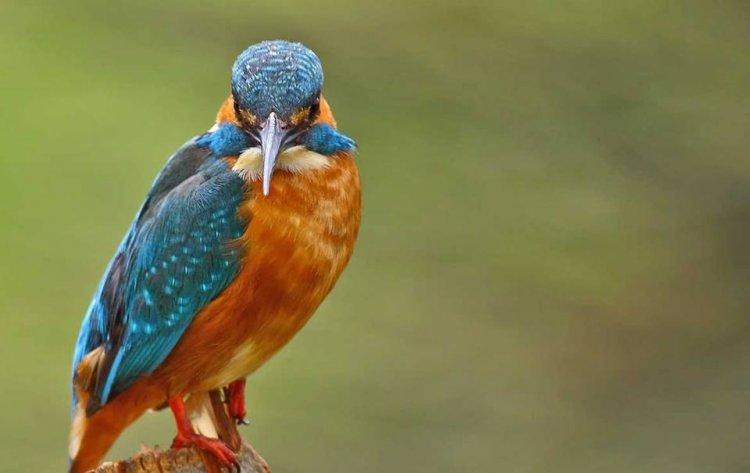 الطيور في محيات النهر الاحمر
