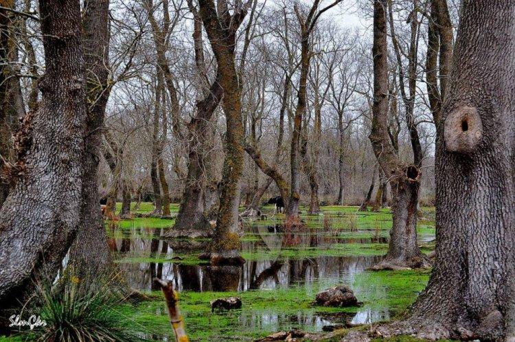 غابات النهر الأحمر