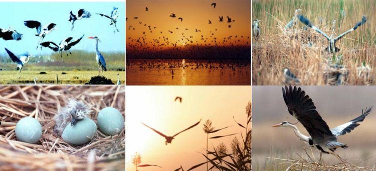 جنة الطيور