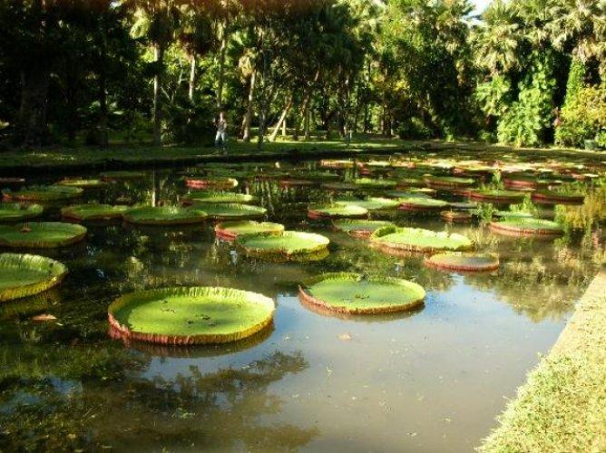 حديقة أورتو كومينال دي لوكا النباتية في لوكا