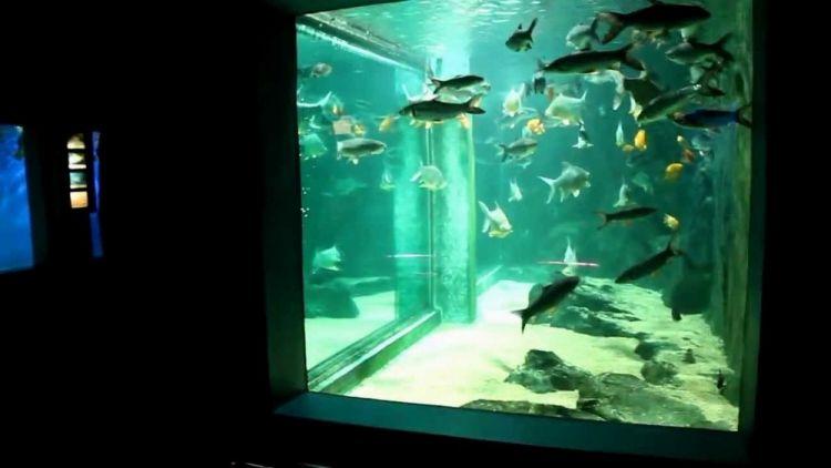 عالم ما تحت الماء لانكاوي