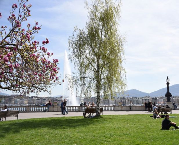 View on the Jet d'Eau from a park