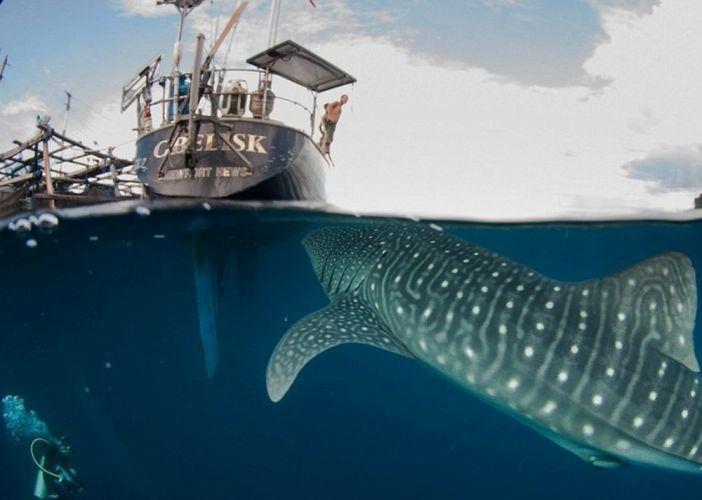 صيادو اندونيسيا يسبحون مع الحيتان
