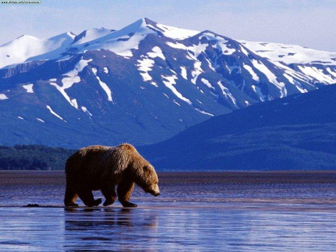 ولاية ألاسكا