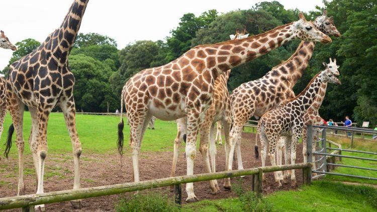 حديقة حيوانات هيلبرون