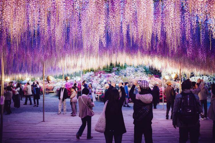 أشيكغ، في اليابان
