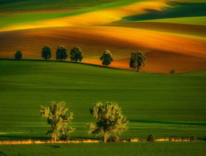 حقول مورافيا، جمهورية التشيك