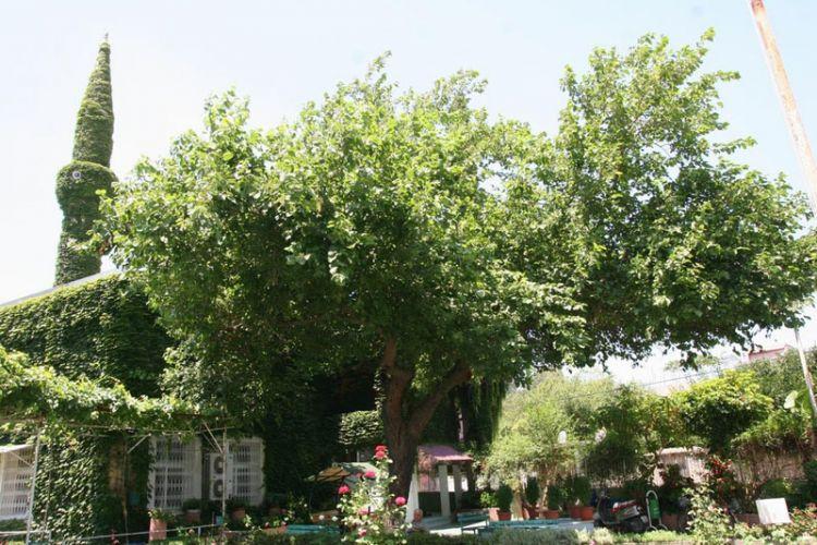 المسجد الأخضر في مدينة أضنة - تركيا