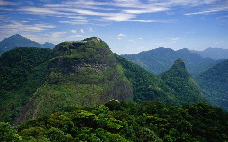 غابة تيجوكا