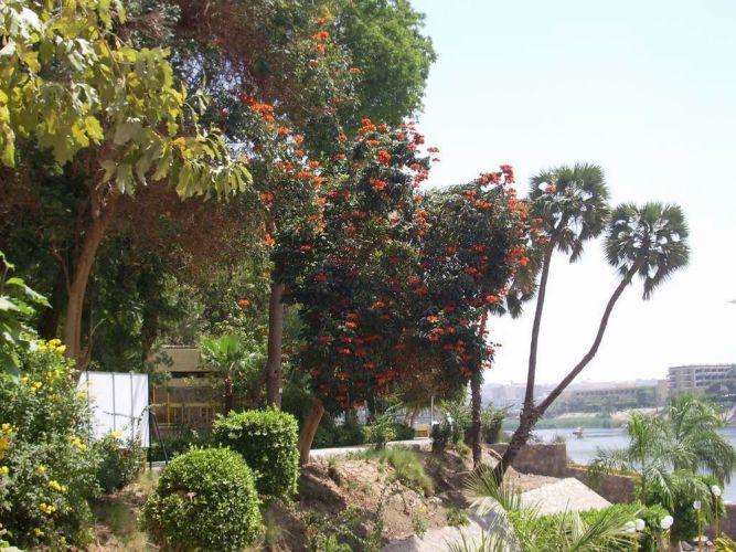 حديقة النباتات في أسوان