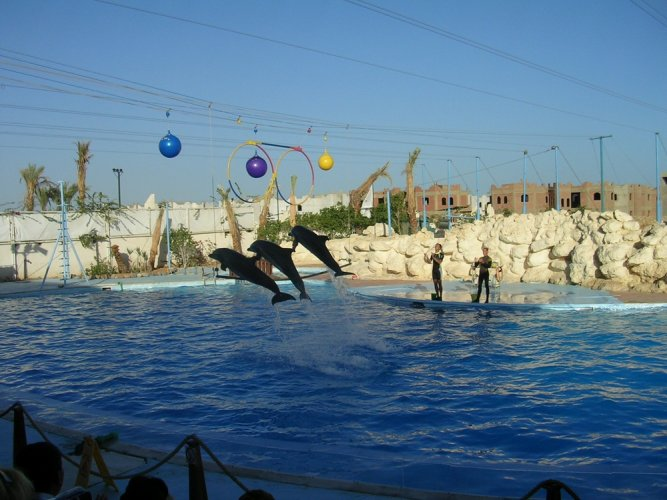 عروض الدلافين