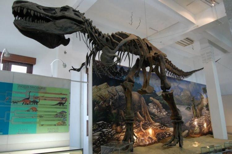 المتحف الجيولوجي