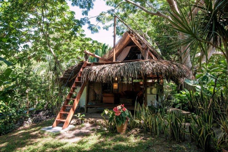 منازل الغابة