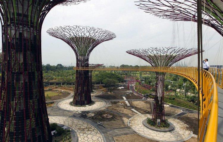 غابة أشجار اصطناعية شاهقة في سنغافورة