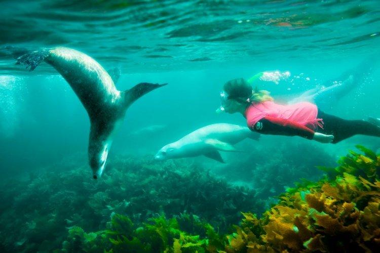 الغوص في جزيرة الكنغر