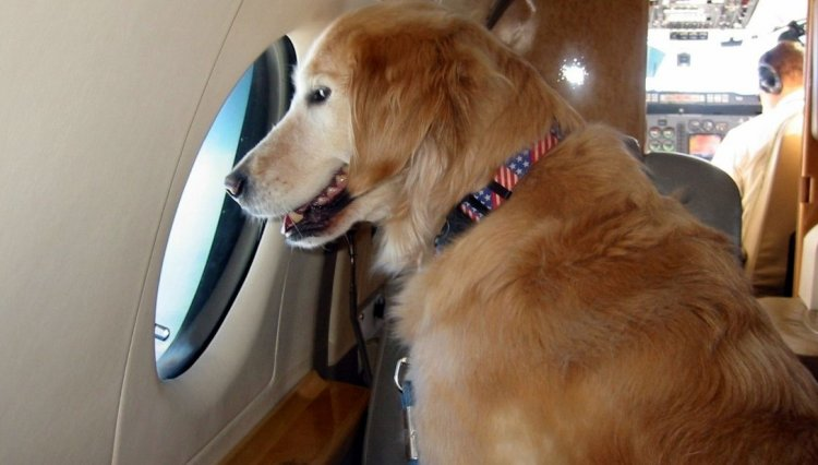 رحلة خاصة لنقل كلب واخرى لهاتف نقال