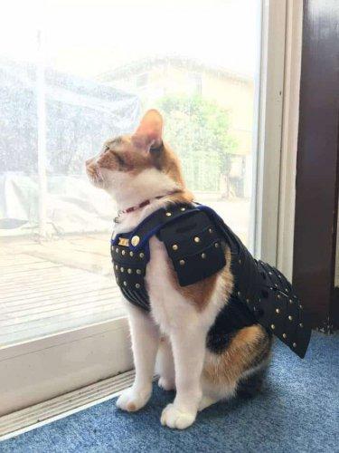 قطة تردري يوري