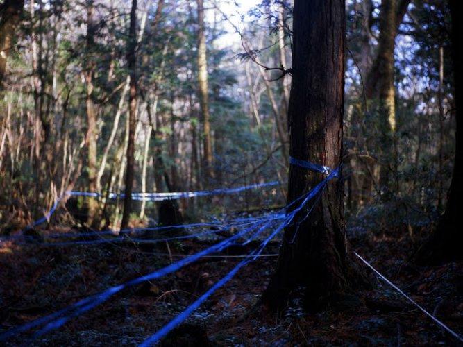 غابة أوكيغاهارا