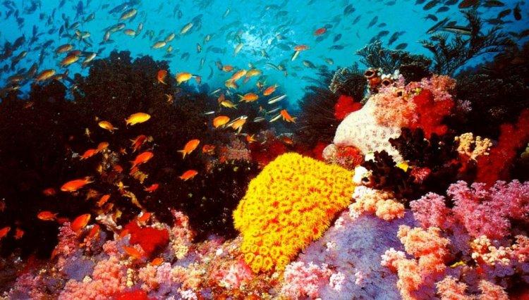 حاجز أستراليا المرجاني