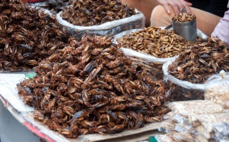 طبق الحشرات