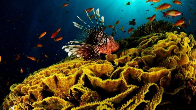 الأسماك البحرية
