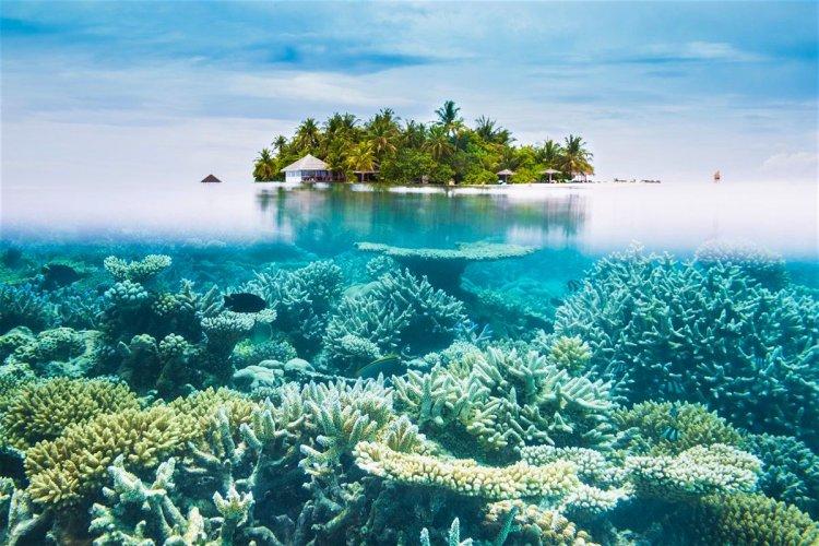 الشعاب المرجانية في أحد شواطئ المالديف