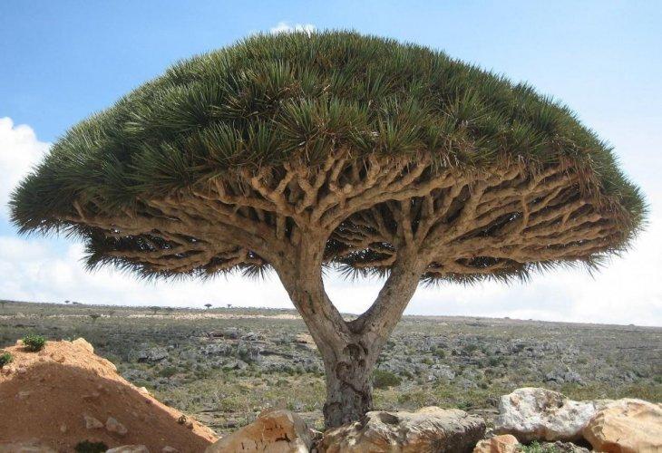 جزيرة سقرطي في اليمن