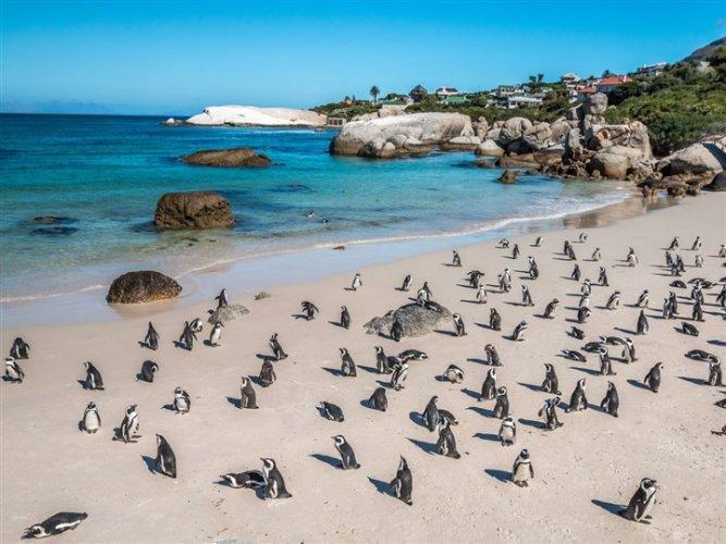شاطئ جنوب أفريقيا