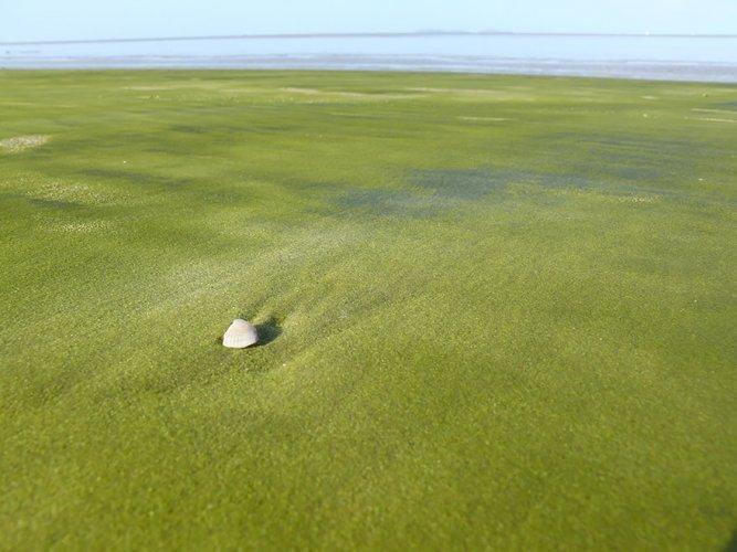 الشاطئ الأخضر