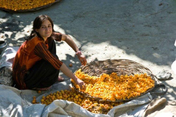 سر حبات المشمش عند قبائل الهونزا