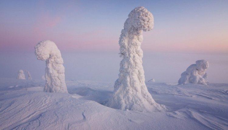 حراس القطب الشمالي