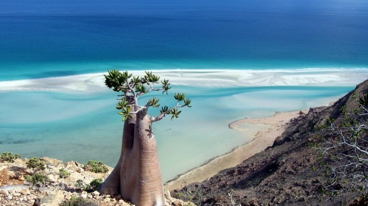 سقطري Socotra