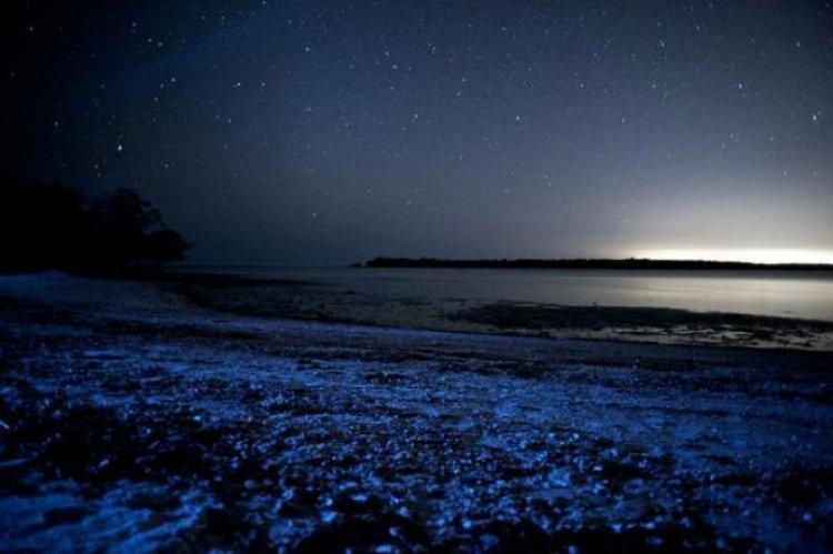 بحر النجوم جزر المالديف