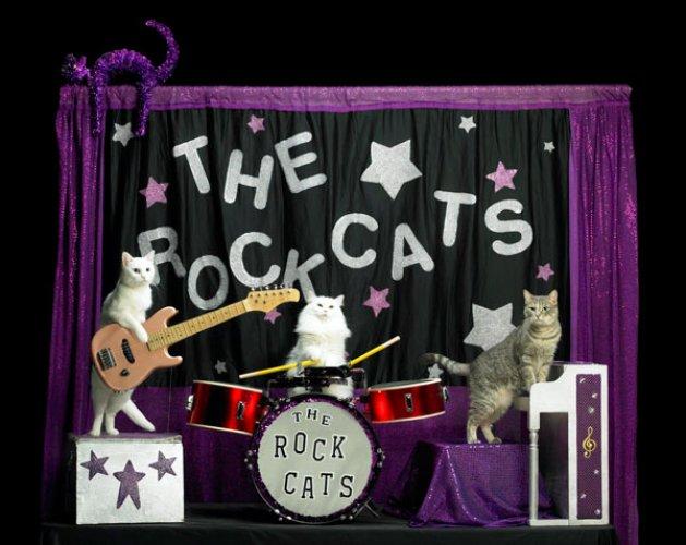 مسرح القطط