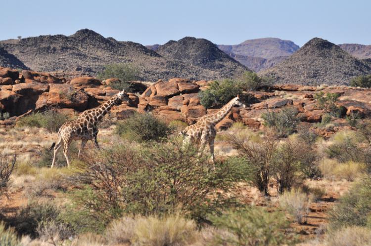 محمية كالاهاري في بوتسوانا