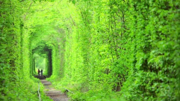 نفق الحب في أوكرانيا فتحاته مغلقة بتلك الأشجار المتراصة
