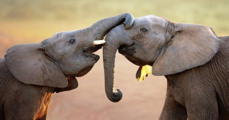 حديقة تشوبي الوطنية في بوتسوانا