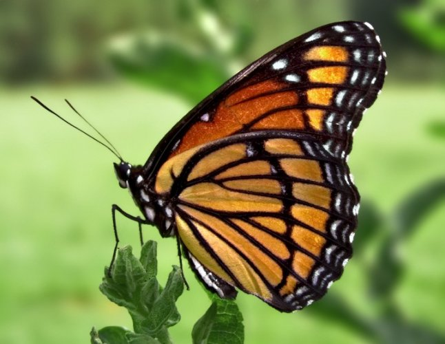 جمال الفراشات الساحر في بيت الفراشات في فيينا