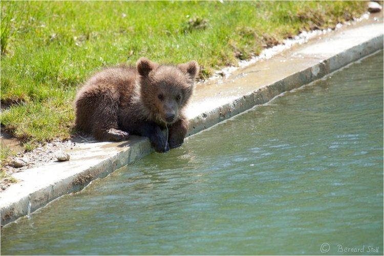 حديقة الدب