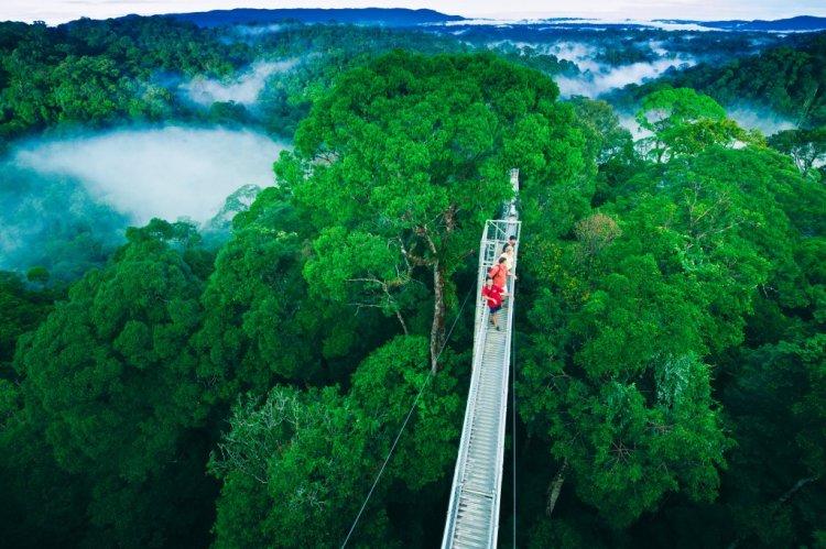 حديقة أولو تيمبورونغ الوطنية بروناي