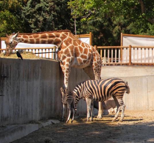 حديقة الحيوانات الألبية في مدينة انسبروك