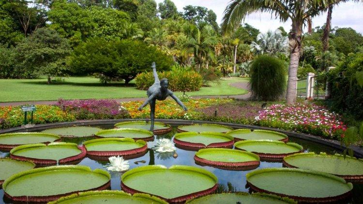 حديقة نباتات ساو باولو