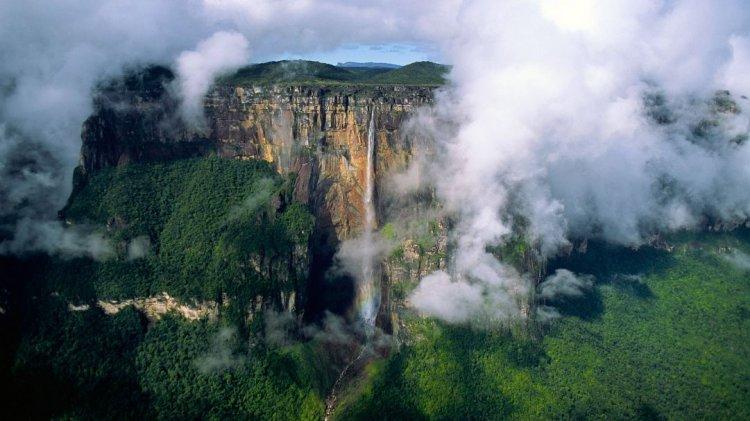 نباتات جبل رورايما فوق السحاب