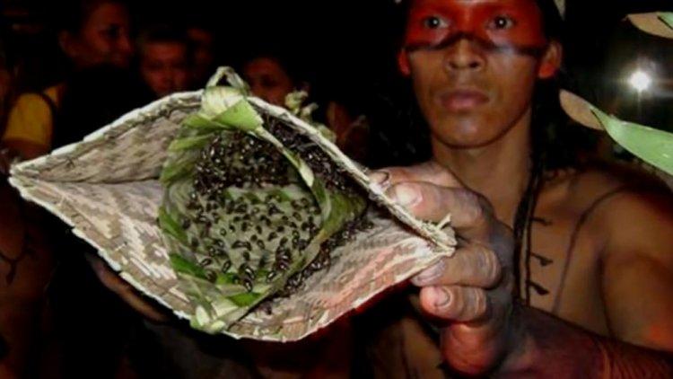 نمل الرصاص فى بيلة ساتيريماوا